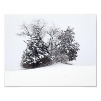 Trees In Winter Photo Print
