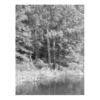 Trees.jpg Postcard