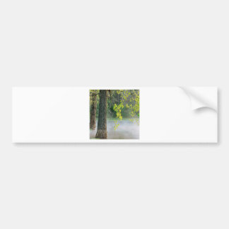 Trees Morning Fog Percy Warner Tennessee Bumper Stickers