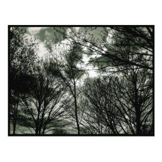 Trees | Postcard