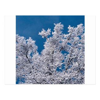 Trees Snow Branches Minnesota Postcard