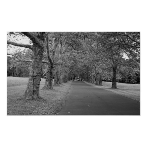 Trees That Never End Photo Print
