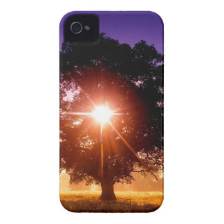 Trees Tree Of Life Devon England iPhone 4 Case-Mate Case
