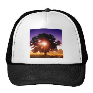 Trees Tree Of Life Devon England Hat