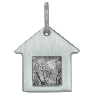 trees wear winter pet name tag