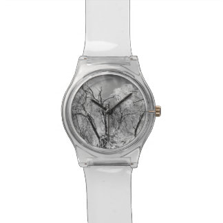 trees wear winter watches