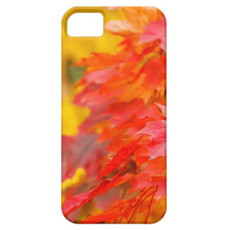 Trees with Orange and Yellow Leaves in the Fall iPhone 5 Case