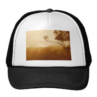 Treetop and fog cap