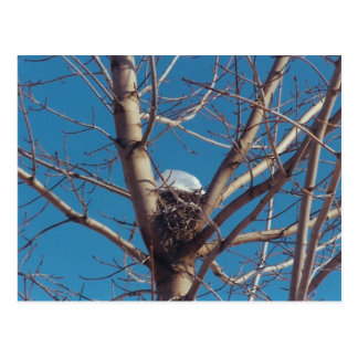 Treetop Chalet - postcard