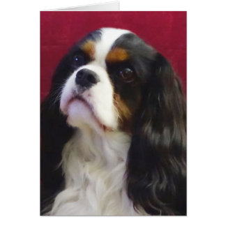 Tri-Color Cavalier King Charles Blank Note Card