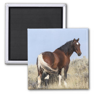 Tri-Color Horse Magnet