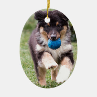 Tri Colored Australian Shepherd Pup Christmas Ornament