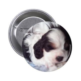 Tri colored cocker spaniel puppy pinback button