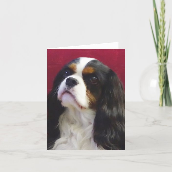 tricolour cavalier king charles blank note card  zazzle