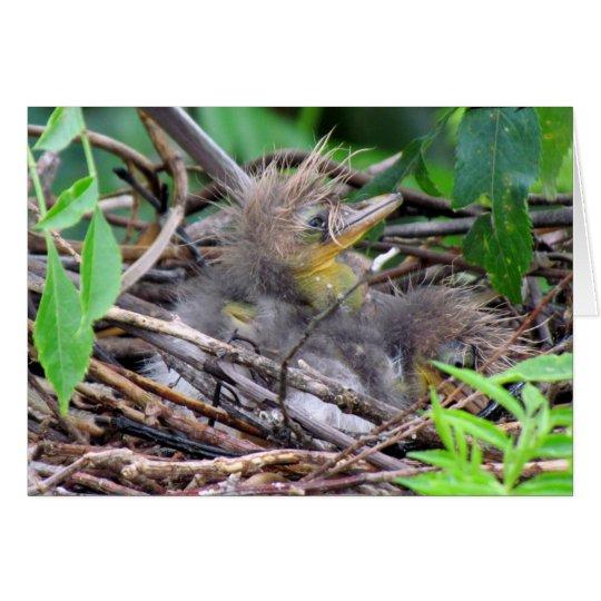Tri Colour Heron Chick Card