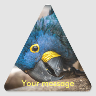Triangle sticker of cute Hyacinth Macaw parrot