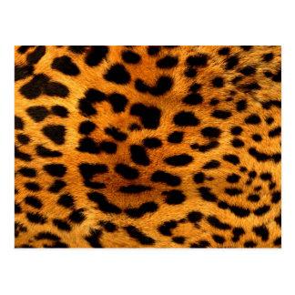 tribal fashionista safari animal leopard print postcard