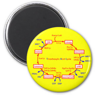 tricarboxylic acid cycle 6 cm round magnet