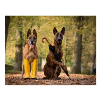Trick dogs I Postcard