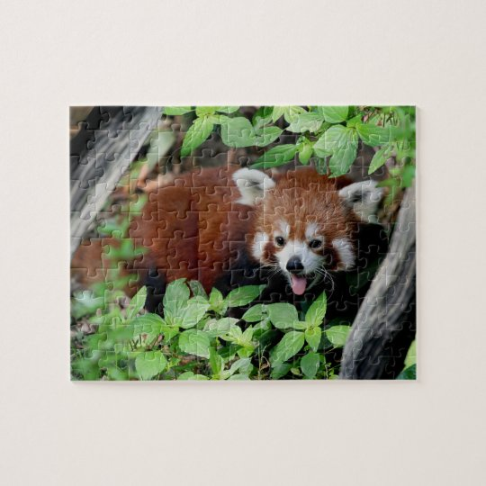Tricksy Red Panda Jigsaw Puzzle