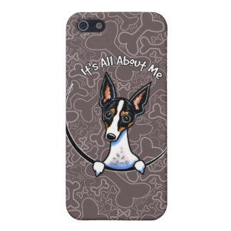 Tricolor Rat Terrier IAAM iPhone 5/5S Cases