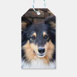 Tricolor Sheltie face Gift Tags