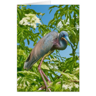Tricolored Heron in a Tree All-purpose card