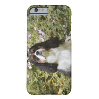 Tricolour Cavalier King Charles Spaniel on grass Barely There iPhone 6 Case