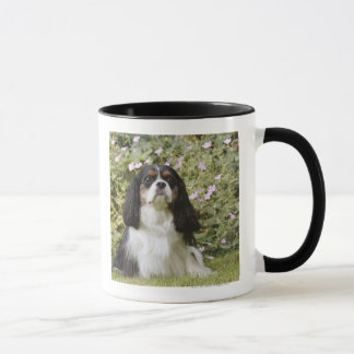 Tricolour Cavalier King Charles Spaniel on grass Mug