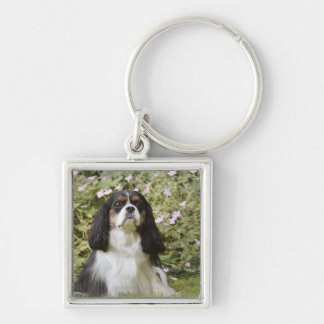 Tricolour Cavalier King Charles Spaniel on grass Silver-Colored Square Key Ring