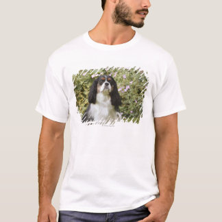 Tricolour Cavalier King Charles Spaniel on grass T-Shirt