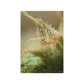 Tricomes palace canvas print
