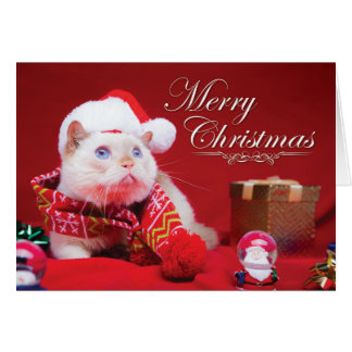 Trident the Cat Christmas Card