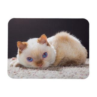 Trident the Cat Magnet