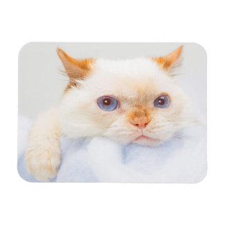 Trident the Cat Magnet 03