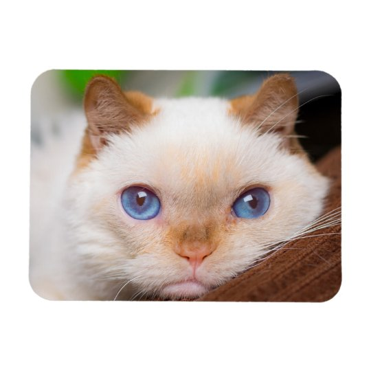 Trident the Cat Magnet 04