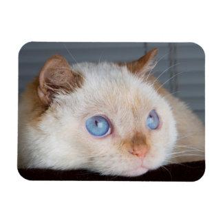 Trident the Cat Magnet 06