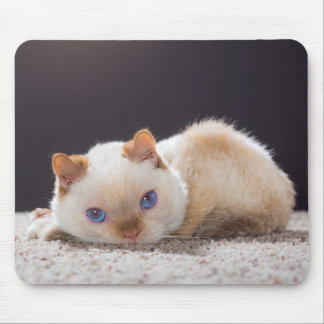 Trident the Cat Mouse Pad 01
