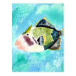 trigger fish sea life painting art prints