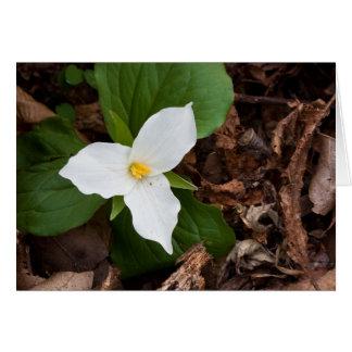 Trillium - Large-flowered II Greeting Card