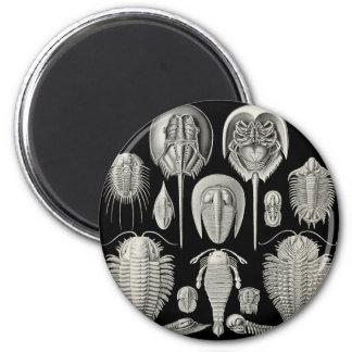 Trilobite! 6 Cm Round Magnet