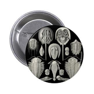 Trilobite! 6 Cm Round Badge