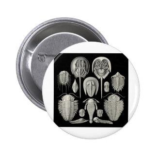Trilobite Buttons
