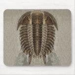 Trilobite Fossil Mousepad