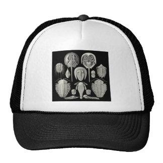 Trilobite Hats