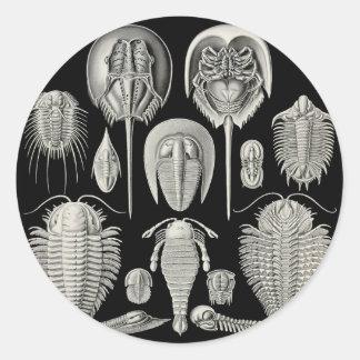 Trilobite! Round Stickers