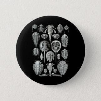 Trilobites and Sea Scorpions 6 Cm Round Badge