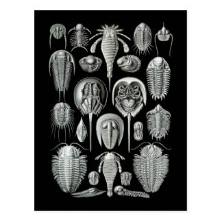 Trilobites and Sea Scorpions Postcard