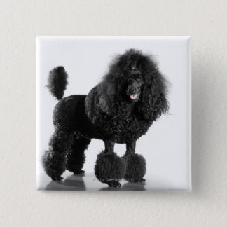 Trimmed black poodle 15 cm square badge
