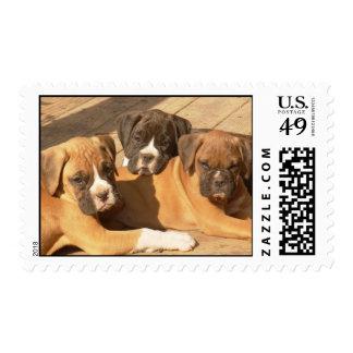 Trio of boxer pups stamp